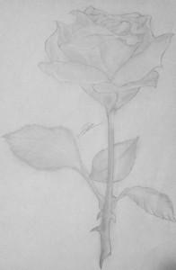 Rosa. Elías Abad